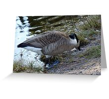 Water World - Mother Goose Grazing Greeting Card