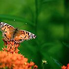 First Butterfly 2015 by autumnwind