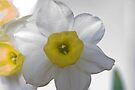 A Wee Bit Daffy - Take 2 by Mike Oxley