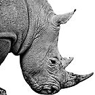 Rhinoceros on white background by Zokakelt