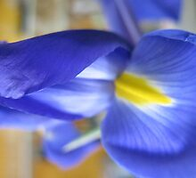 Iridiscent Iris by MarianBendeth