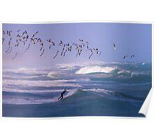 Black Skimmers With Surfer at Sebastian Inlet,Florida Poster