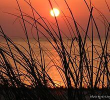 Golden Sunset-Hudson Beach Florida by Eric Snyder