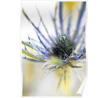 litltle spikey flowers Poster