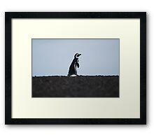 Penguin out for a walk Framed Print