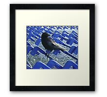 firm purchase (raven upon shopping trolleys) Framed Print