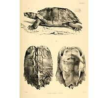 The Reptiles of British India by Albert C L G Gunther 1864 0481 Geormyda Grandis Turtle Photographic Print
