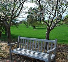 A Fine Day at the Arboretum... by Michelle BarlondSmith
