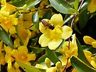 Yellow Trumpet Flowers and Bee by Lucinda Walter