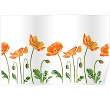 Watercolor poppies Poster