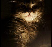 The Cat's Pride by VampiX