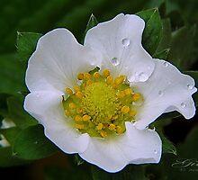 """Fruit Blossom"" by Gail Jones"