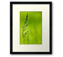 I Know Why The Grass Is Green Framed Print