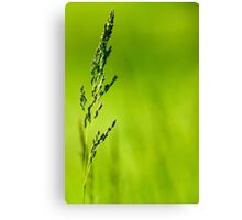 I Know Why The Grass Is Green Canvas Print