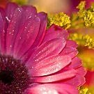 Just Bloom by Angela  Ardis