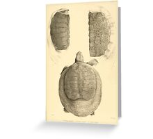 The Reptiles of British India by Albert C L G Gunther 1864 0491 Trionyx guntheri, Ornatus, Chitra Indica Turtle Greeting Card