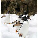 Penguin Crew by dozzam