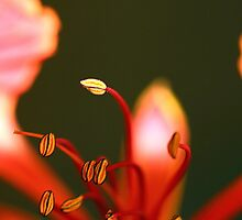 Beautifully blurred. by debjyotinayak