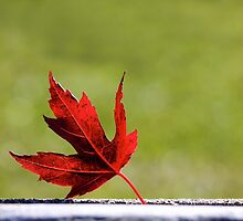 Happy Canada Day by EugeJ