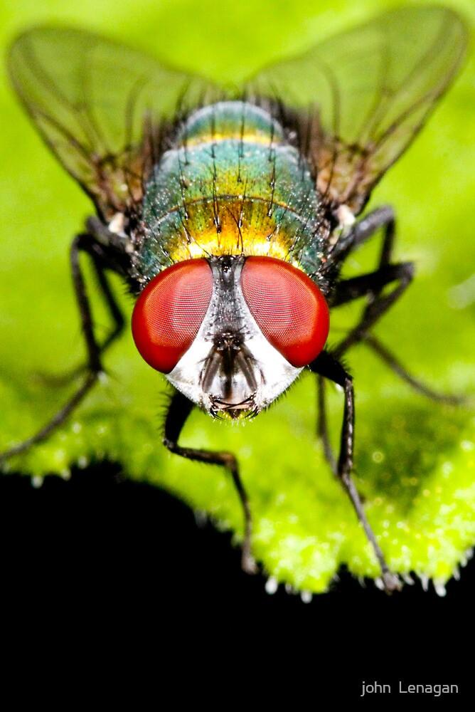 the fly by john  Lenagan