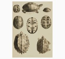 The Reptiles of British India by Albert C L G Gunther 1864 0487 Cuora Amroinensis, Pangshura Tentoria, Pyxidea Mouhoutii, Emys Crassicolis Turtle Baby Tee