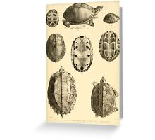 The Reptiles of British India by Albert C L G Gunther 1864 0487 Cuora Amroinensis, Pangshura Tentoria, Pyxidea Mouhoutii, Emys Crassicolis Turtle Greeting Card