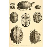 The Reptiles of British India by Albert C L G Gunther 1864 0487 Cuora Amroinensis, Pangshura Tentoria, Pyxidea Mouhoutii, Emys Crassicolis Turtle Photographic Print