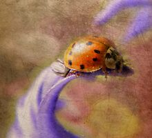 Ladybug by Shelly Harris