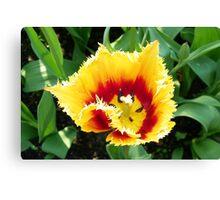 Firery Tulip Canvas Print