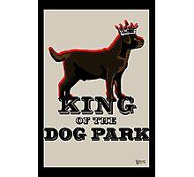 Labrador Retriever King of the Dog Park Photographic Print