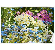 A Waiting Game: Primroses and Forget-me-nots Poster