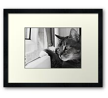 Wait a minute...I'm inside when there's a butterfly out there!! Framed Print