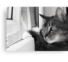 Wait a minute...I'm inside when there's a butterfly out there!! Canvas Print