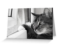 Wait a minute...I'm inside when there's a butterfly out there!! Greeting Card