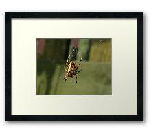 Garden Spider in Web Framed Print