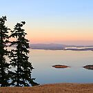 June Evening on Brown Ridge Saturna Island by TerrillWelch