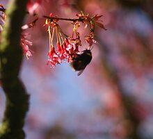 The Bee's Knees? by Nik Watt