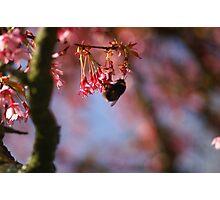 The Bee's Knees? Photographic Print