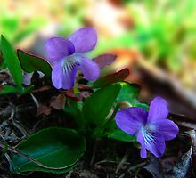 Two of a Kind Violets by vigor
