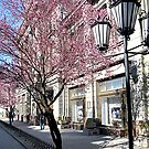Spring in city streets by kindangel