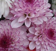 Three Purple Tipped Dahlias by Sandra Cockayne