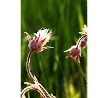 Wildflowers 2 Photographic Print