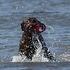 Chocolate Lab Having Fun In The Sea by Moonlake