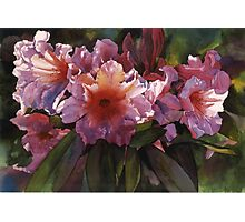 "Watercolor ""Autumn Gold"" Rhododendron  Photographic Print"