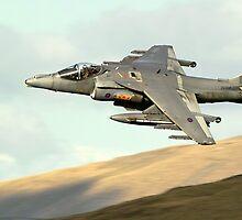 Harrier by Stephen Kane