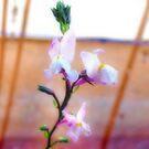 White Flower by Sandra Moore