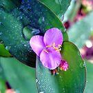 Purple Flower by Sandra Moore