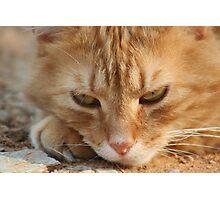 Orange Tabby Cat Sleeping on Ground Photographic Print