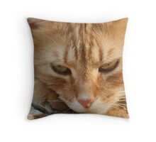 Orange Tabby Cat Sleeping on Ground Throw Pillow