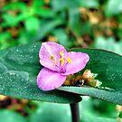 Purple Flower 2 by Sandra Moore